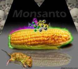 GMO HEALTH MONSANTO WWW.COVVHA.NET