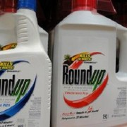 Roundup Chemical Doubles Risk of Lymphoma